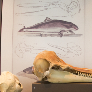 """Installation view of """"I Love You California: A Natural History"""""""