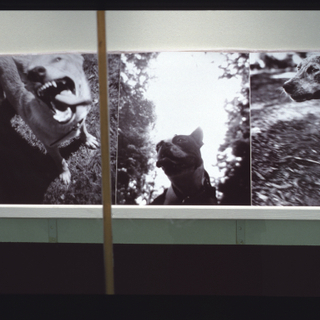 "Installation view of ""Bark: Photographs by Ann Giordano"""