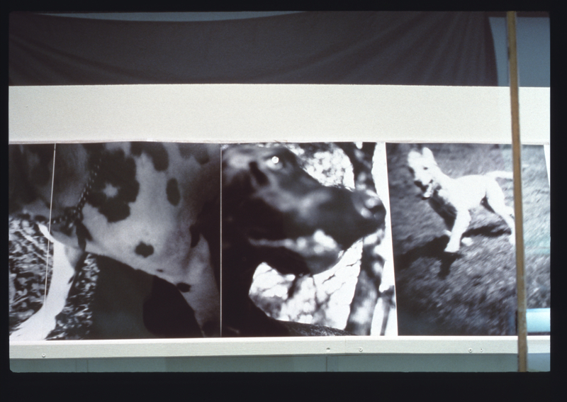 """Installation view of """"Bark: Photographs by Ann Giordano"""""""