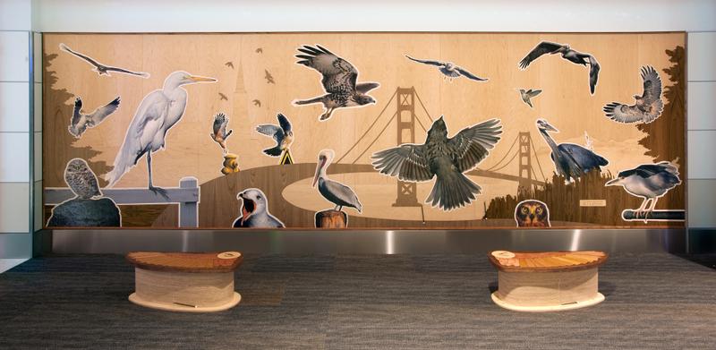 Bay Area Bird Encounters